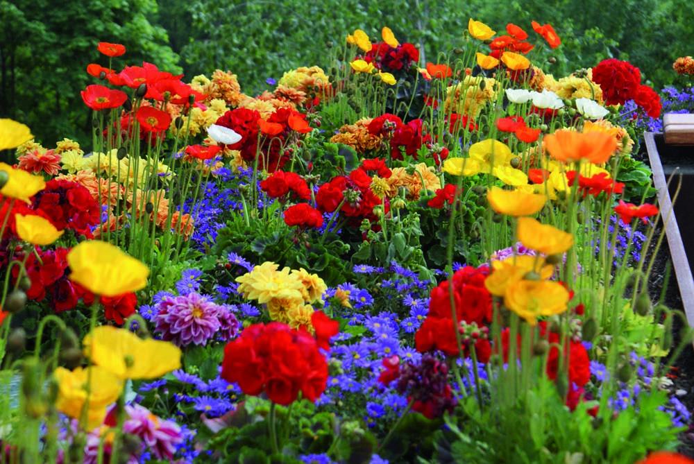 - Anzeige - Live-Blog zur Suche des schönsten Gartens der Oberlausitz!