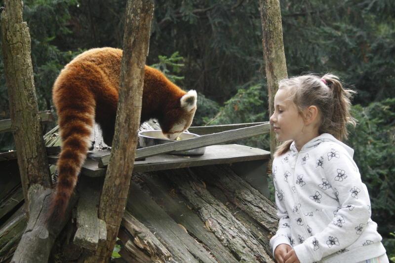 Kröte und Kitakinder beim Roten Panda
