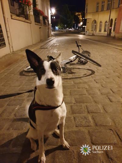 Hündin Lilly stoppt Fahrraddieb