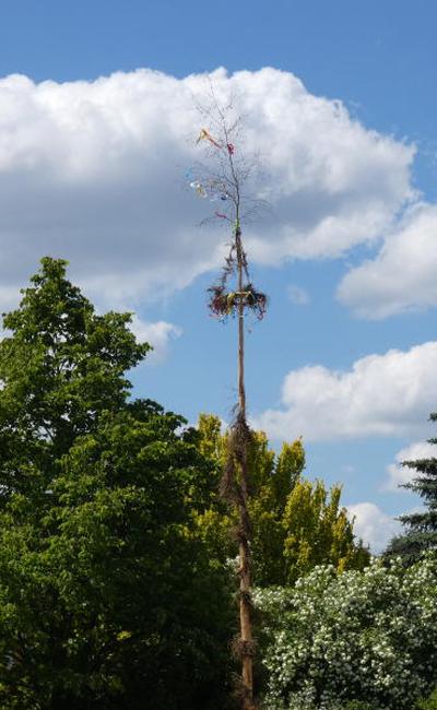 Viele Bäumchen für einen Baum