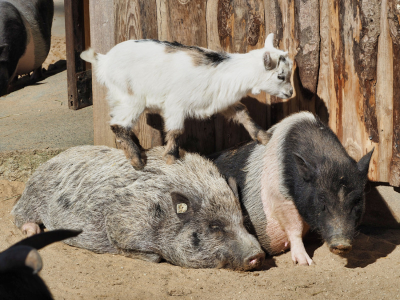 Tierischer Rabatt in allen Zoos der Region