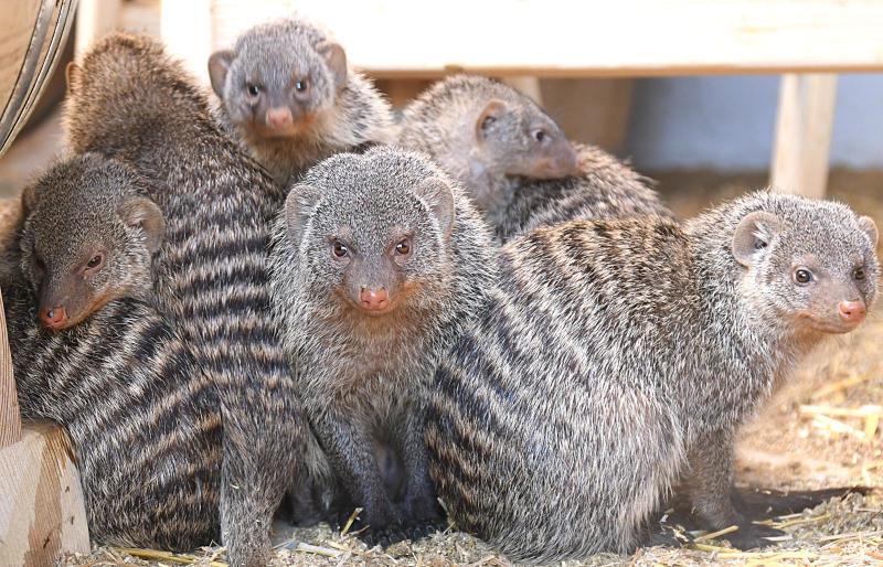 Tierparkzensus ergibt: Es sind 599 Tiere in 87 Arten