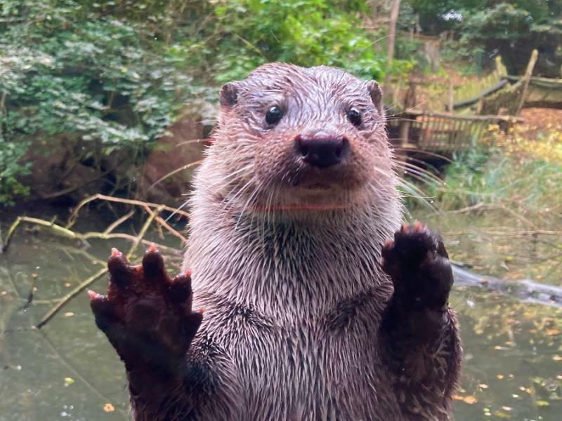 Görlitzer Tierpark hilft Ottern an der Havel