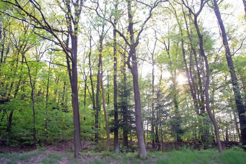 Die Stadt Zittau sperrt ihren Wald