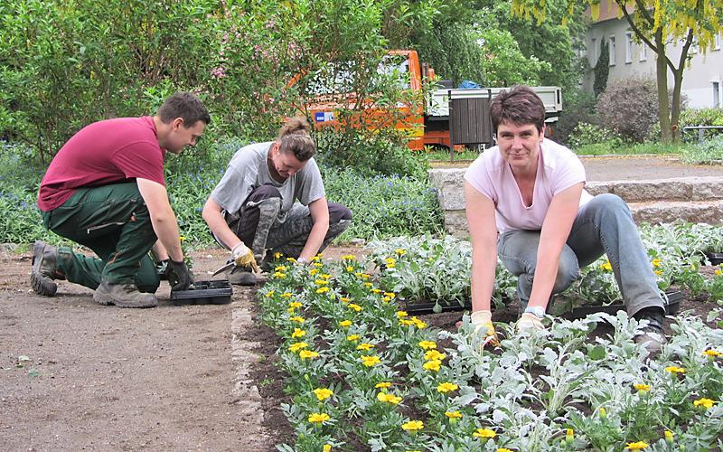 Bautzen pflanzt für den Sommer