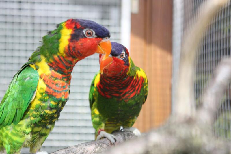Vogelausstellung mit vielen Exoten