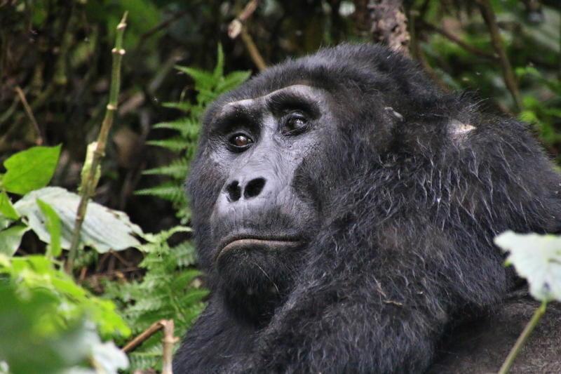 Ein Ausflug durch die Wildnis Ostafrikas