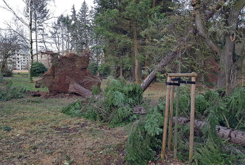 Sturmtief fegt durchs Löbauer Stadtgebiet