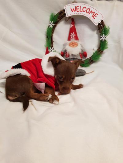 Auf zur Tierweihnacht  ins Tierheim Bischorf