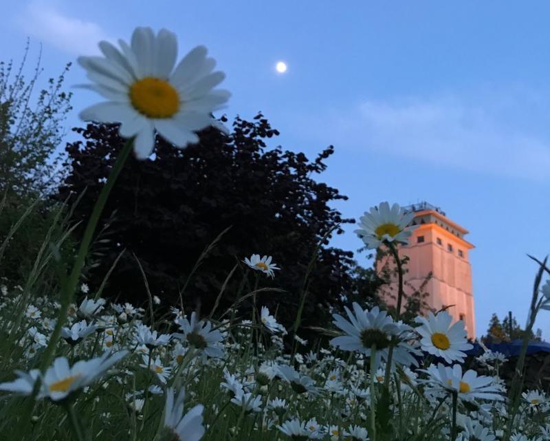 Buntes Programm zum Wasserturmfest in Neugersdorf
