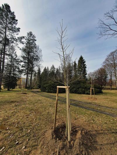 Junge Bäume für den Löbauer Stadtwald