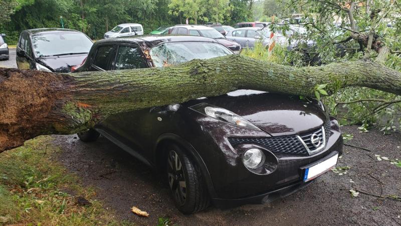 Baum stürzt auf vier Autos