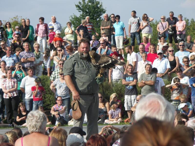 Greifvogelschau auf der Bühne am Olbersdorfer See