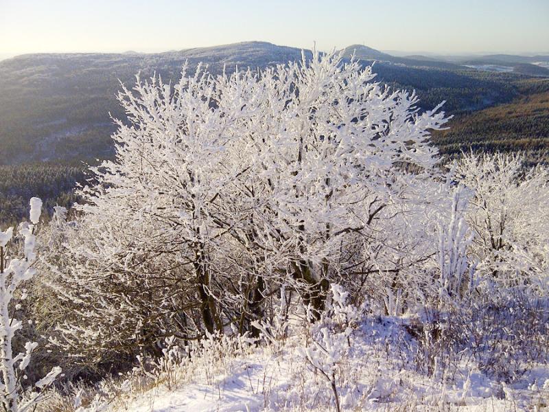 Wintersport an der Lausche