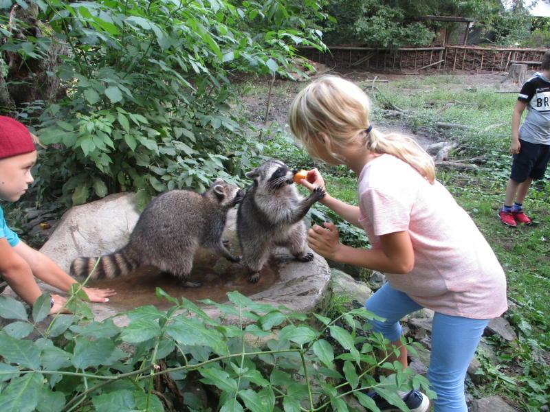 Tierpark sucht  Kinder für AG