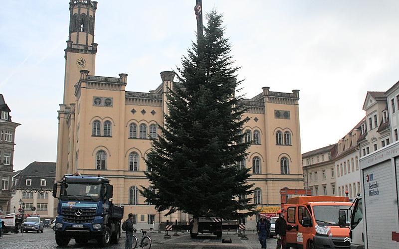 Weihnachtsbäume zieren Zittau