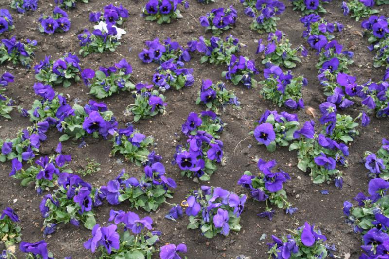 Blumendiebe auf dem Friedhof