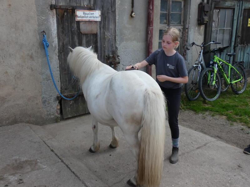 Kleine Ponyfarm hat große Pläne
