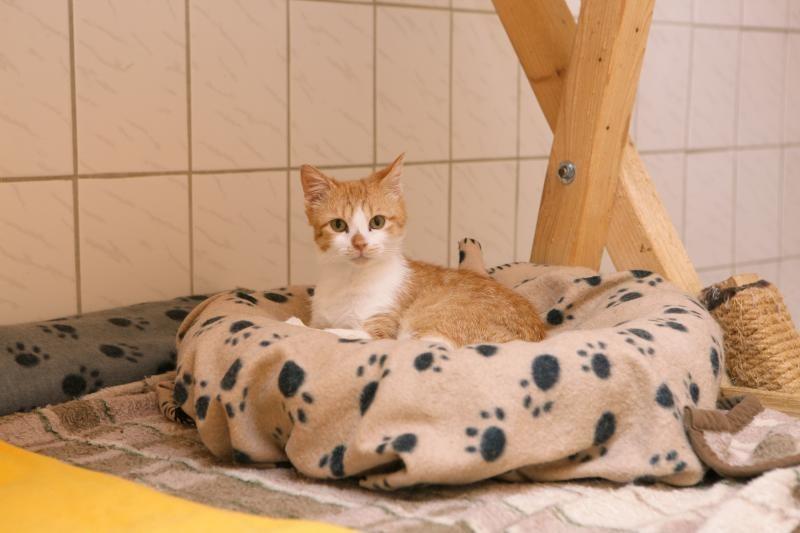 Katzennachwuchs beschäftigt Tierheimmannschaft