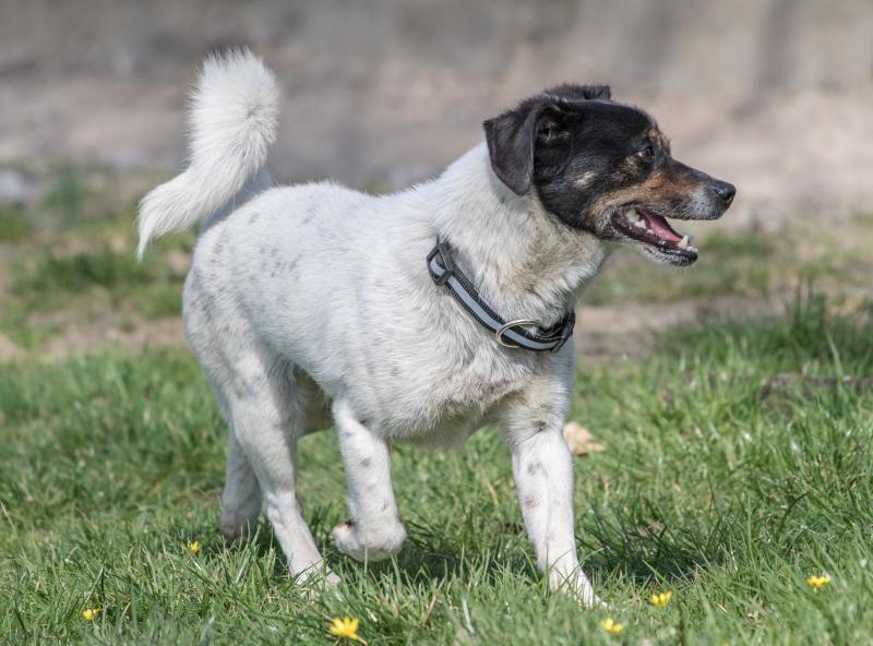 Ein Mischlingshund mit Potenzial