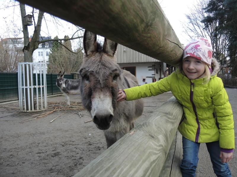 Politik wagt Reset: Zoo fiebert auf Neustart hin