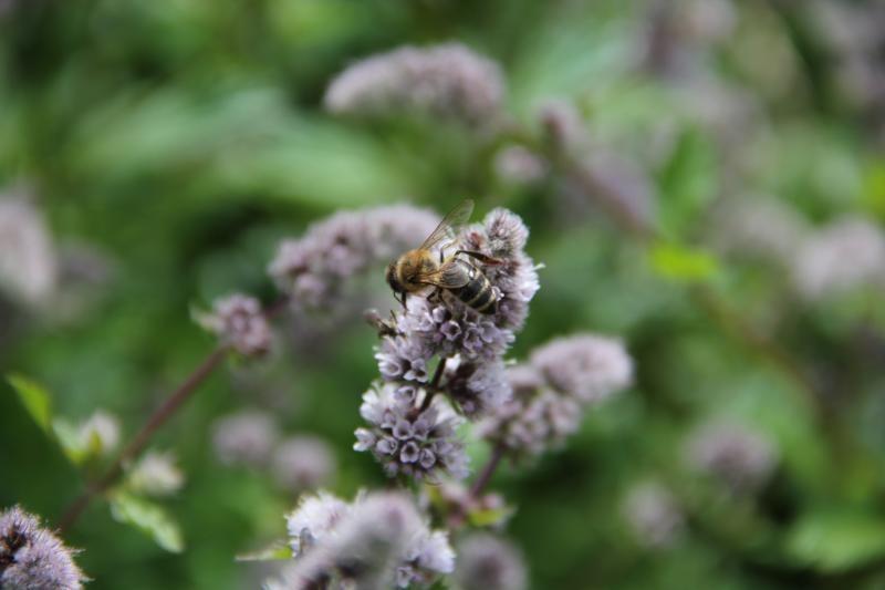 Imkerszene zieht es zum Bienenfachtag