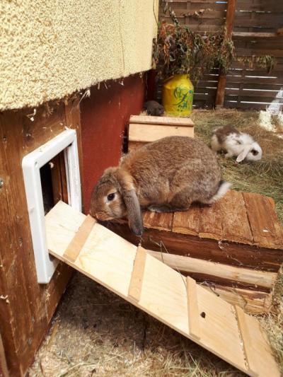 Wollknäuel und andere Tierheimbewohner bitten zum Tag der offenen Tierheimtür