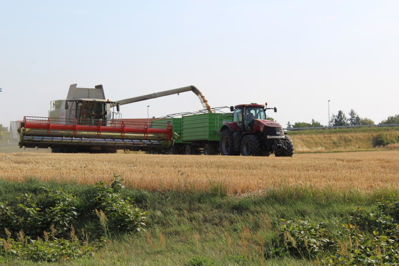 Folgenreiche Dürre: Bauern in Nöten