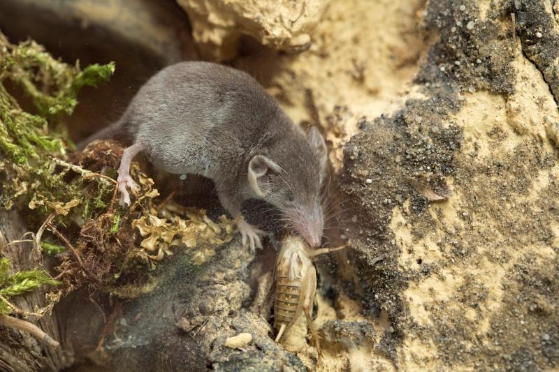 Tierpark zeigt kleinste Säugetiere der Welt