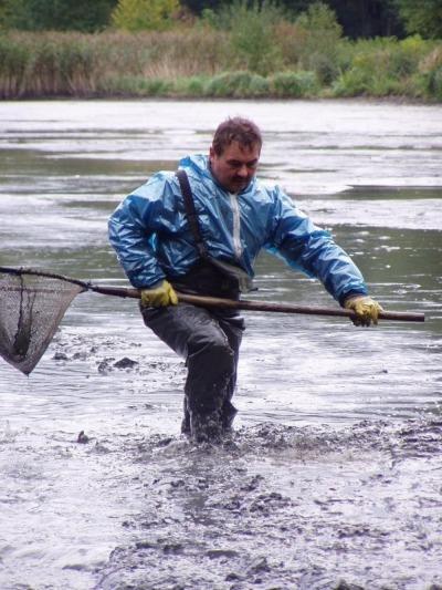 Am Leubnerteich wird abgefischt