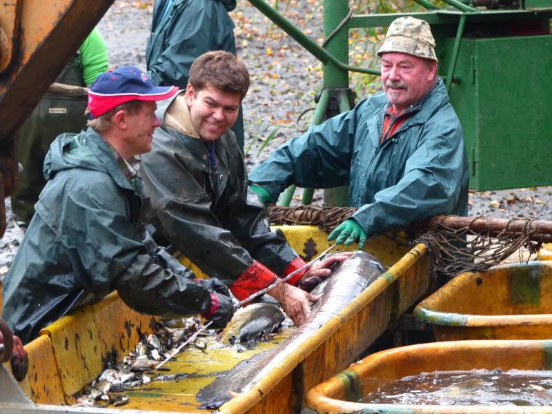 Die Fischwirtschaft kämpft ums Überleben