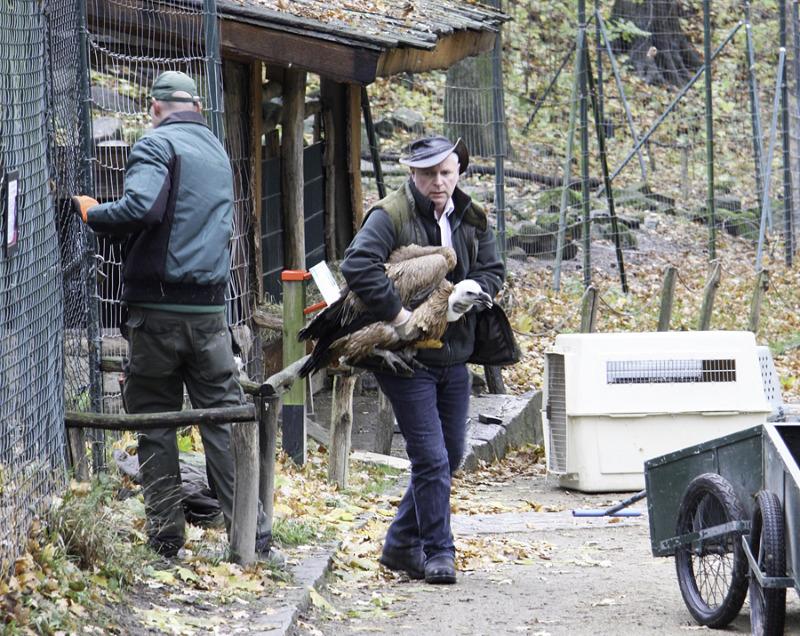 Geflügelpest: Tierpark-Vögel ziehen um