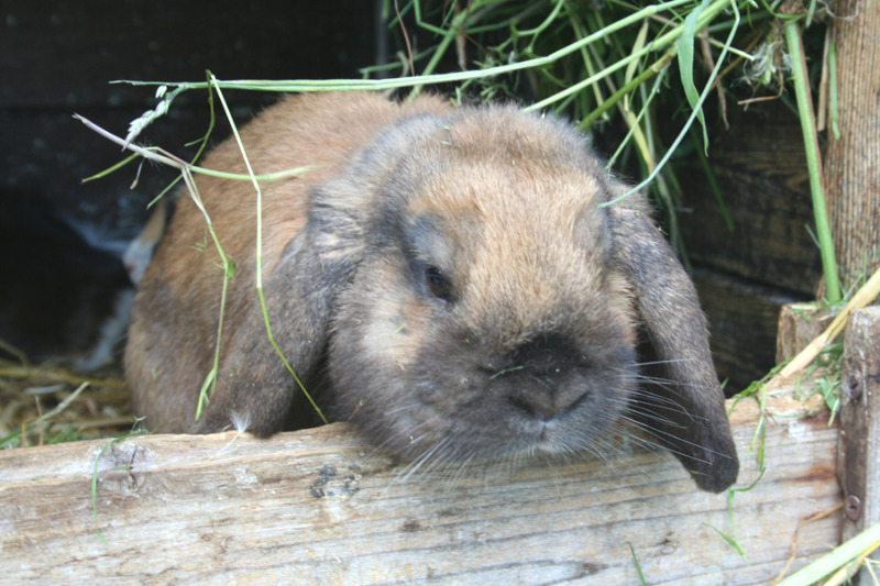 Seuchengefahr in der Region: Tote Kaninchen richtig entsorgen!