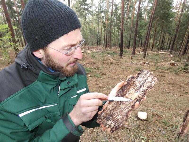 Borkenkäfer zwingt zum Waldumbau