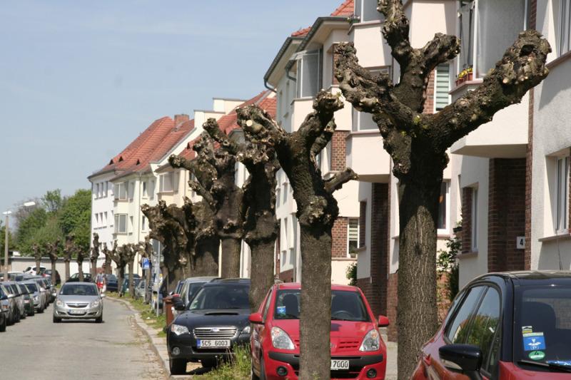 Baum-Fragmente sorgen für Ärger