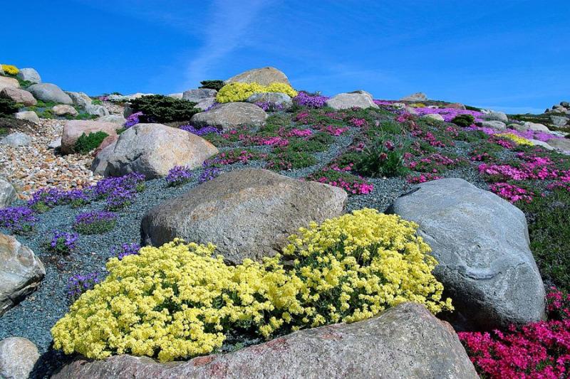 Große Frühjahrs-Pflanzenbörse im Findlingspark