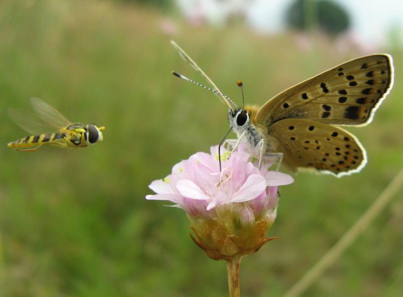 Das Neißetal im Fokus der Naturfreunde