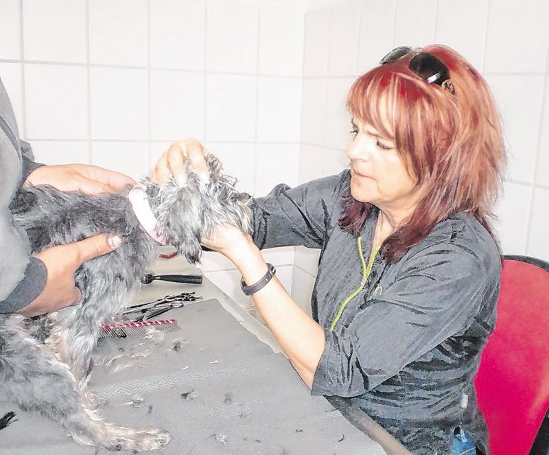 Den Tierheimhunden auf den Pelz gerückt