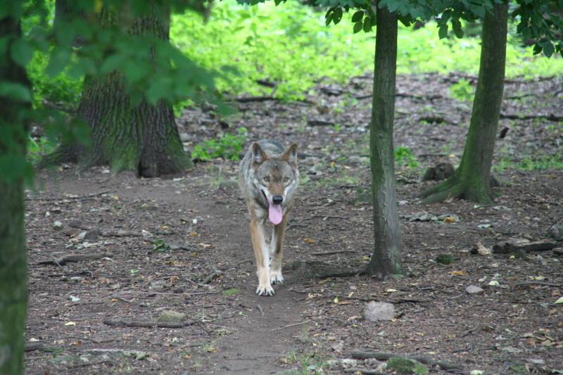 Toter Hund befördert Wolfsdebatte aufs Neue