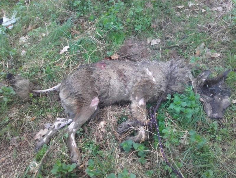 Belohnung für Ergreifung des Wolftöters ausgesetzt