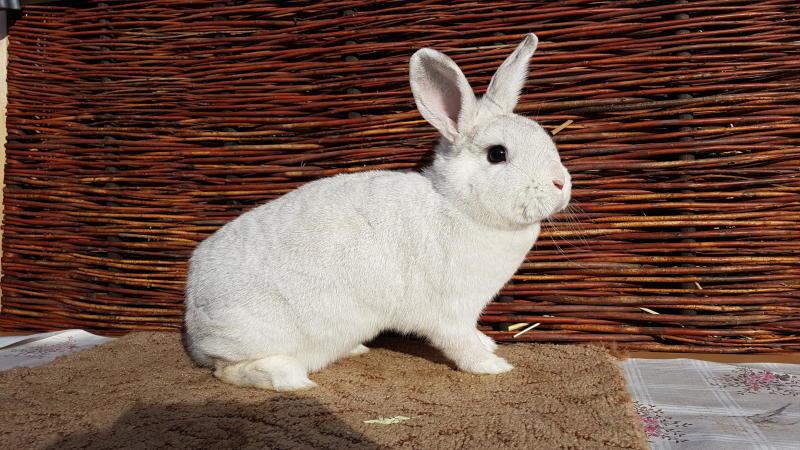 Zum 50. wird Lokschuppen zum Kaninchenstall