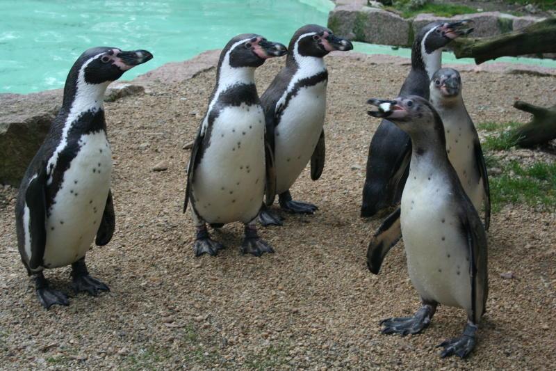 Muttertagsfest im Zittauer Tierpark