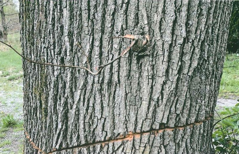 Polizei sucht nach Baumschändern