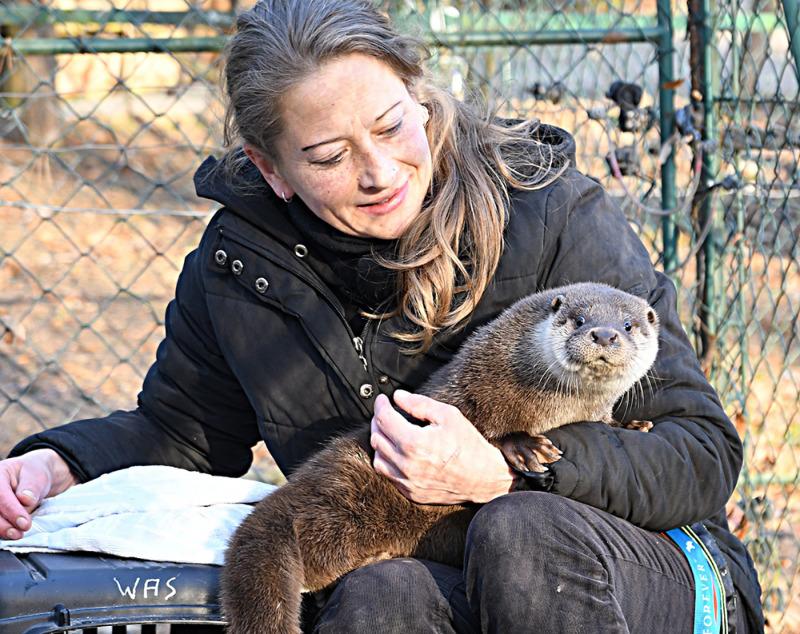 Verwaiste Otterdame Emma mit Doppelfunktion