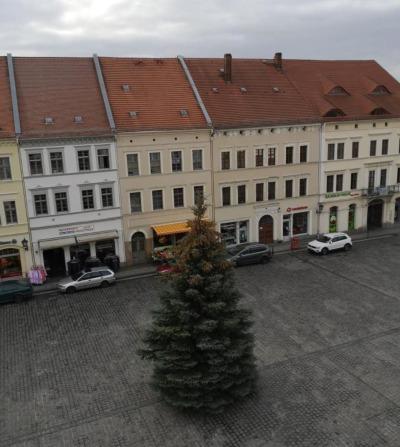 Löbau schmückt  Weihnachtsbaum