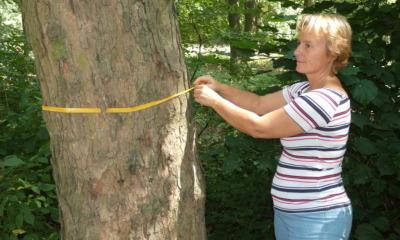 Bestattungswald öffnet im Oktober