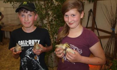 Auch junge Züchter zeigten junges Geflügel