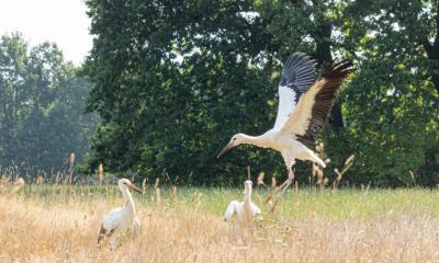 Storchen-Drama im Naturschutz-Tierpark