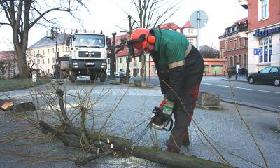 Bäume weichen für Kreisverkehr