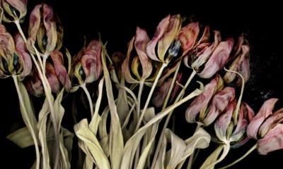 """transform floral« im Detail"